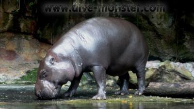 Singapore-Zoo-10