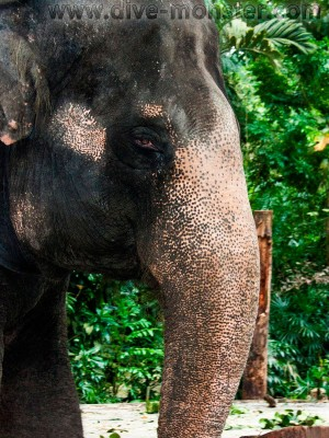 Singapore-Zoo-23