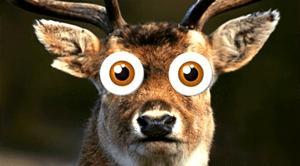 deer in headlights