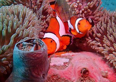 Diving in Dauin - Luca Sanctury