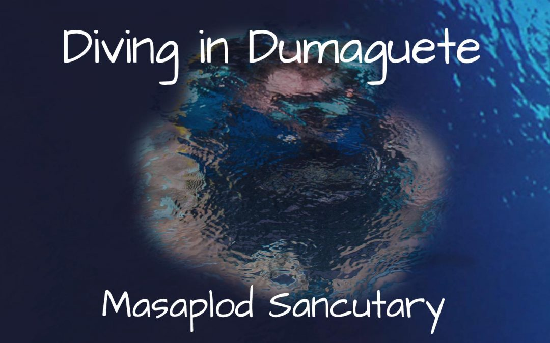 Diving in Dumaguete - Masaplod Sanctuary