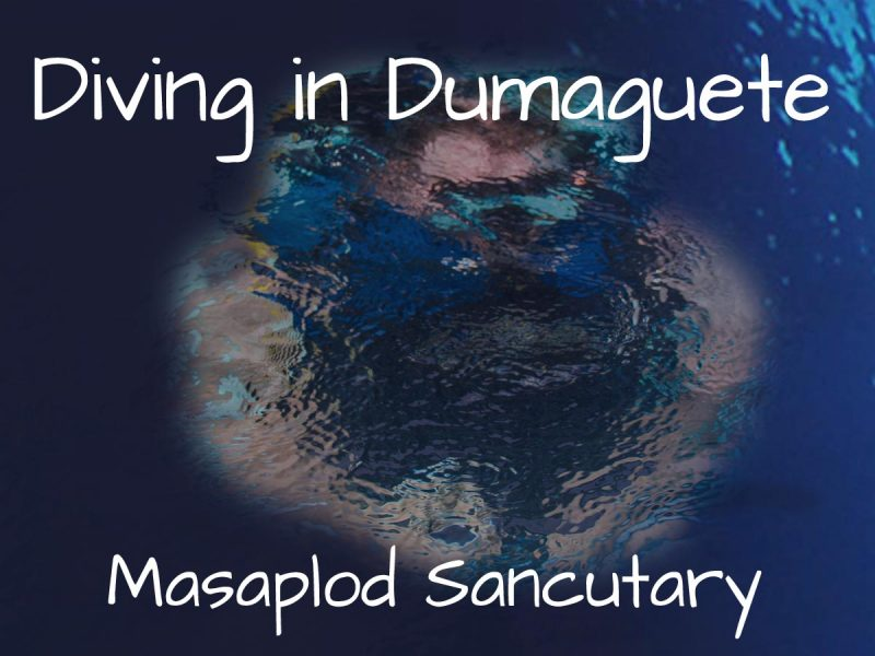 Diving in Dumaguete – Masaplod Sanctuary