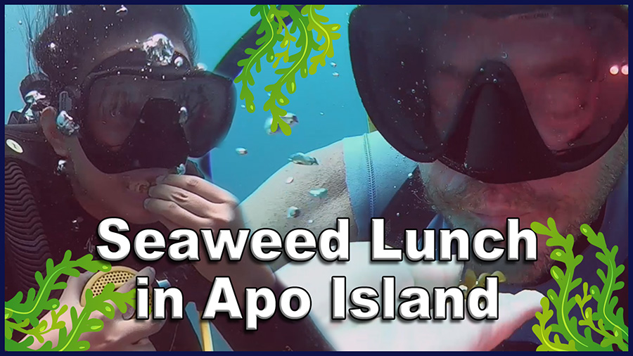 Under Water Snack Time at Apo Island