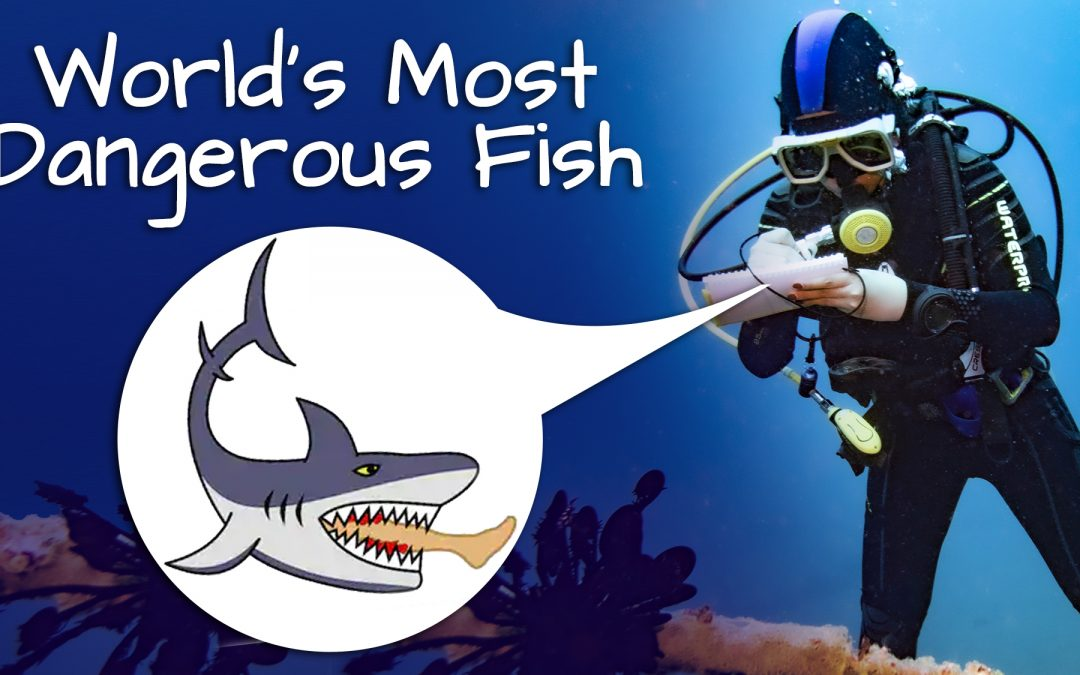 The most Dangerous Fish !!!