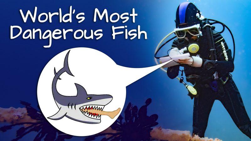 The most Dangerous Fish !!!