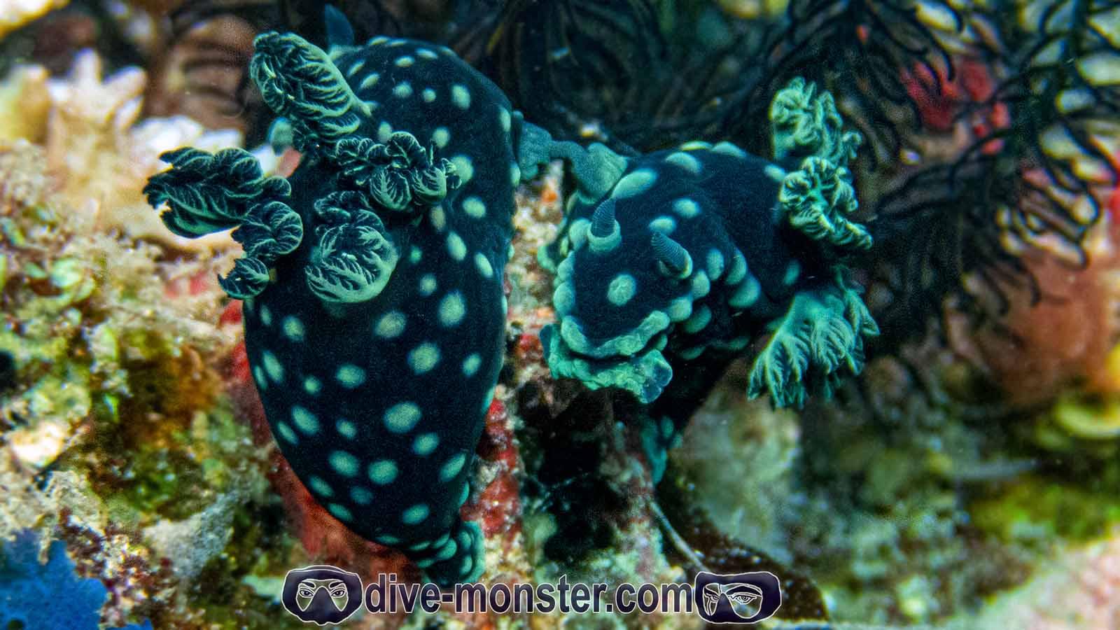 Basak Zamboanguita - Nudibranch Sex